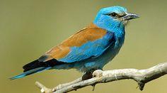 ptaki polskie - Szukaj w Google