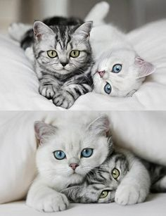 So many cute kittens videos compilation 2018 - Kittens And Puppies, Cute Cats And Kittens, Kittens Cutest, Animals And Pets, Baby Animals, Funny Animals, Cute Animals, Animals Planet, Pretty Cats