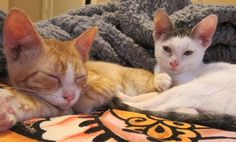 Animals Rescued Through PETA Investigations   Features   PETA