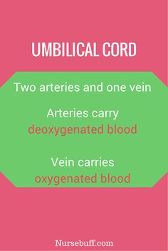14 Obstetrics & Newborn Care Nursing Flashcards | NurseBuff #Nurse #Mnemonics #Flashcards