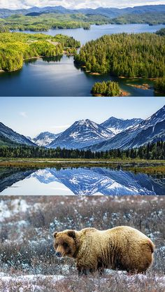 In Alaska, you can point your camera in any direction and have a beautiful photo. http://www.hollandamerica.com/cruise-destinations/alaska-cruises?WT.mc_id=SM_Pinterest