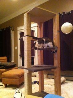 DIY cat tree. Sturdy