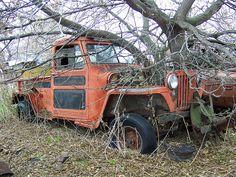 Tree Jeep