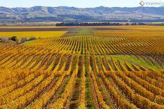 Estações do Ano: Qual a melhor época para se visitar a Nova Zelândia