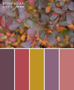 Bohemian Gypsy Jane: Color Love-Fall Color Inspiration