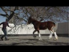 "2013 Budweiser Super Bowl Ad — Extended Version of The Clydesdales: ""Brotherhood"""