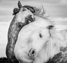 Horse Photograph - Battling Stallions by Tim Booth