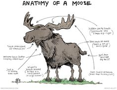 strip for May / 11 / 2015 - Anatomy of a Moose// from *Sheldon,* by Dave Kellett