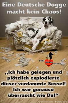 Eine Deutsche Dogge macht kein Chaos! >> http://www.ich-liebe-tiere.com/ <<