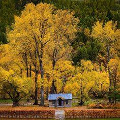 Autumn colours in Arrowtown  #Arrowtown #NewZealand  @nikonaustralia D600 + 85mm