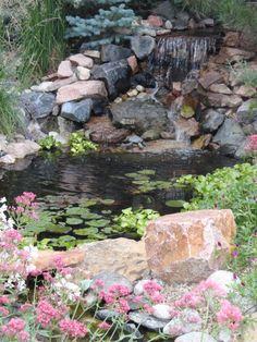 My backyard pond!