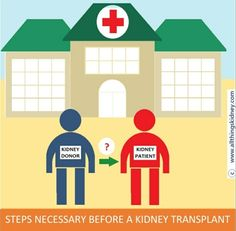 Get an outline of what an average pre #transplant preparation for the #patient and the #kidney #donor may entail. Find answers to 1. Finding a matched kidney donor ; 2. What-why-how of cross matching & tissue typing ; 3. Pre-transplant testing to assess donor fitness ; 4. Pre-transplant testing of patient & assessment of general fitness for surgery ; 5. In-camera donor consent (in select nations only) ---- And more! Liver Function Test, Heart Function, Kidney Failure, Kidney Disease, Human Kidney, Kidney Donor, Lipid Profile, Uk Health, Family Presents