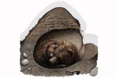 Eläimillä on keinonsa selvitä Pohjolan talvioloista. Osa rakentaa pesän ja kotiutuu, toiset viettävät kulkurin elämää ja saalistavat. Millaisen pesän karhu valitsee talviunilleen? Biology For Kids, Science Biology, Prehistory, Forest Animals, Science And Nature, Kids Learning, Bean Bag Chair, Lion Sculpture, Statue