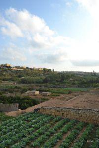 Farm land near Dahlet Qorrot #Gozo