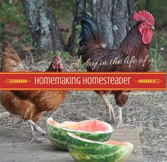 A day in the life of a Homemaking Homesteader - One of the best things I love about living in the country and on our little farm is that no two days are the same! http://oursimplelife-sc.com #homemaking #homesteading