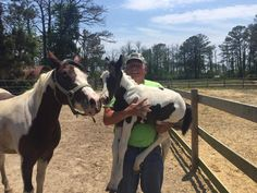 Beebe Ranch | Chincoteague Chamber of Commerce. I believe that is Billy Beebe pictured with a new foal.