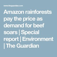 Amazon rainforests pay the price as demand for beef soars | Special report | Environment | The Guardian