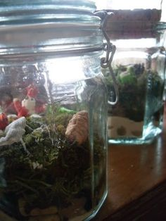 Terrariums with kids (Carbon Cycle- PTOE)