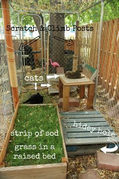 I'm going to show you the catio (outdoor cat enclosure) that my 4 cats and various foster cats have used since April 2013 and one move which involved ... #catsdiyenclosure