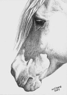 Horse Pencil Drawing, Pencil Drawings Of Animals, Horse Drawings, Animal Sketches, Art Drawings, Horse Artwork, Animal Paintings, Horse Paintings, Pastel Paintings