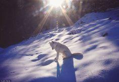 parc national de grand teton | Ce photographe adopte un chien, puis l'emmène faire le tour des Etats ...