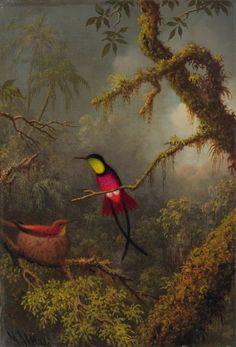 Martin Johnson Heade - Crimson Topaz Hummingbirds c 1875-85