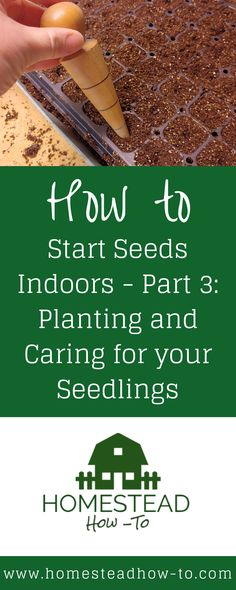 How to Start Seeds Indoors including information on choosing good seed starting soil, planting, and caring for your seedlings. Organic Gardening, Gardening Tips, Vegetable Gardening, Veggie Gardens, Fall Vegetables, Growing Vegetables, Growing Tomatoes, Garden Projects, Plant Projects