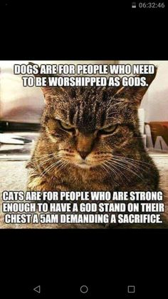 """cats are for people who are strong enough fo have a God stand on their chest at 5am demanding a sacrifice"". :)"