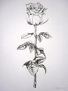 A white rose on long stem by kellyjones00