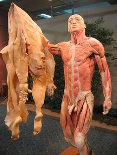 Plastination is a technique or process used in anatomy to preserve bodies or body parts, first developed by Gunther von Hagens in Anatomy Art, Human Anatomy, Gunther Von Hagens, Medical History, Anatomy And Physiology, Science And Nature, Macabre, Body Works, Human Body