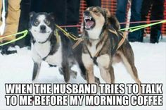 funny animal pictures | dogs | coffee