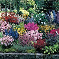 Drought tolerant Zone 5 perennials