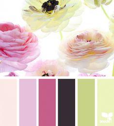 Color Flora   Design Seeds