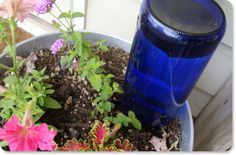 neat idea -- use a wine bottle as an automatic plant waterer. This really does work! Just fill, flip it over and stick it in the dirt!