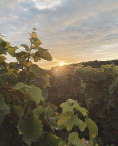 Magnifique levé de soleil sur nos vignes Saint Emilion, Celestial, Sunset, Pictures, Outdoor, Life, Painting, Art, Grape Vines