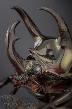 Metal robot Rhinoceros Beetles, Cool Pictures of Alien Insects - Insect Macro Photography Macro Fotografie, Fotografia Macro, Cool Insects, Bugs And Insects, Beautiful Creatures, Animals Beautiful, Unusual Animals, Reptiles, Insect Photography