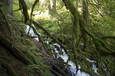 Wahkeena Loop Hike Multnomah Falls OR [5472x3648] (OC)