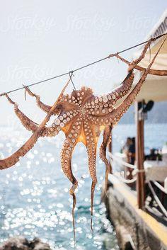 Octopus being air dried, Santorini by Kirstin Mckee - Stocksy United Santorini Grecia, Santorini Island, Mykonos, Greek Sea, Greek Beauty, Crete, Corfu, Greece Travel, Greek Islands