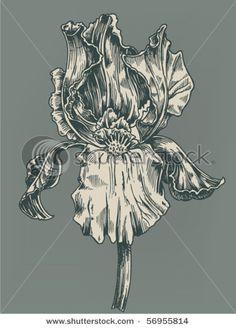 black and white flower illustration