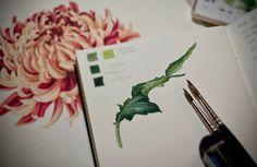 Eunike Nugroho: Japanese Chrysanthemum: Continuing an Unfinished Artwork. Watercolor Pencils, Watercolor Paintings, Watercolors, Botanical Art, Botanical Illustration, Japanese Chrysanthemum, Japanese Watercolor, Art Tutorials, Painting Tutorials