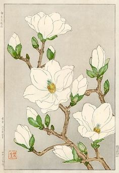Magnolia by Kawarazaki Shodo (1889-1973), Japanese - Most of his woodblock prints were published in the 1950s when there was a strong demand for handmade Japanese woodblock prints by the American occupation forces (petitcabinetdecuriosites via barsan)