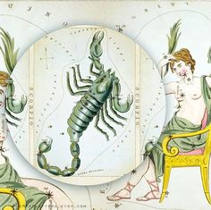 Scorpio zodiac constellation on melamine plate by TheMadPlatters