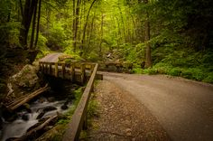 Roaring Fork Motor Trail in The Great Smoky Mountain National Park