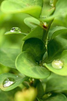 Free stock photo of plant, rain, raindrops, green