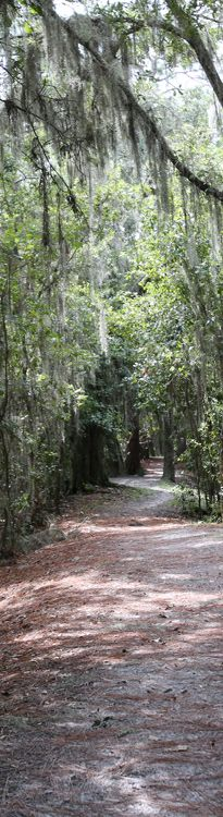Unpaved trails to hike and bike in Central Florida