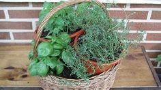 Tus barbacoas tendrán este verano un toque aún más personal. Olvídate de los tarros con hierbas secas del súper y cultiva en la terraza, o incluso en la cocina, orégano, albahaca y tomillo