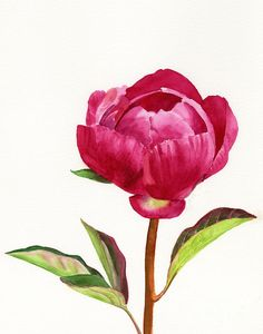 Red Painting - Red Peony With Leaves by Sharon Freeman