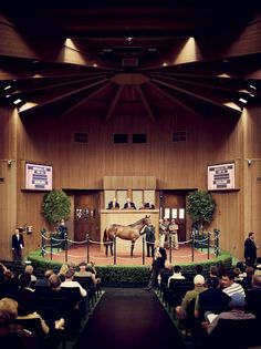 Photo Credit: Joe Pugliese . A horse is auctioned off during the September yearling sale at Keeneland.
