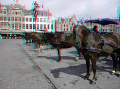 3d Pictures, 3d Photo, Bruges, Fair Grounds, Horses, Animals, Animales, Animaux, Animal