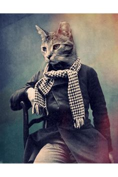 Real Men Dont LOL... Cat in Scarf